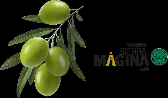 Cocina Con Sergio Los Fines De Semana | Varea El Olivo Y Gana Un Viaje A Sierra Magina Con Sergio Fernandez